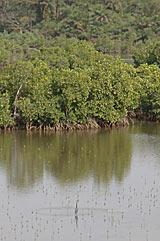 La magnifique mangrove du Siné-Saloum